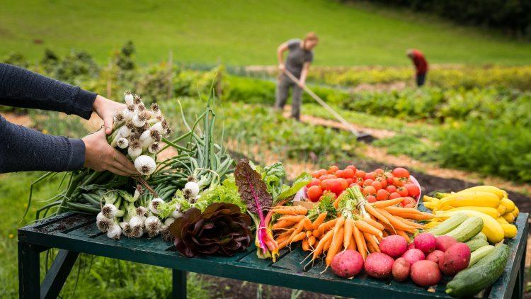 Building Resource for Farm Enterprise